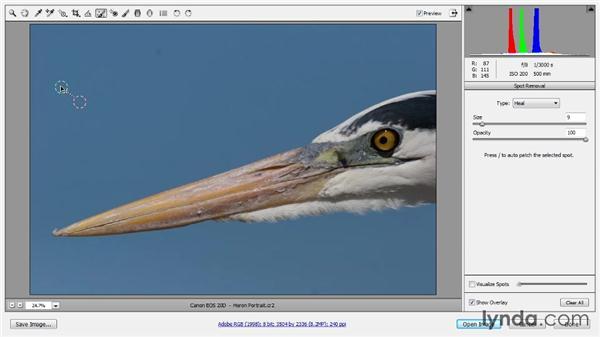 Spot removal: Photoshop CC Raw Workshop