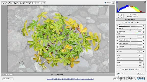 Selective coloring effects with the Adjustment Brush: Photoshop CC Essential Training (2013)