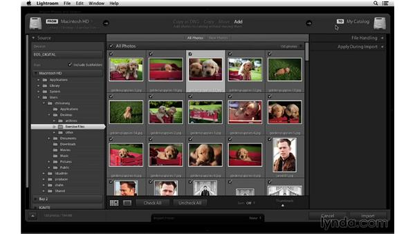Importing from a folder: Lightroom 5 Essentials: 01 Importing with the Library Module