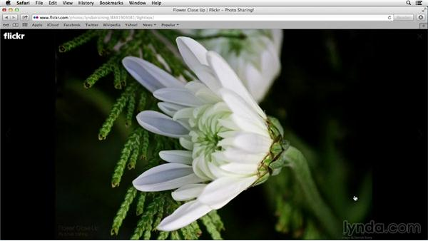 Getting around in your photostream and lightbox: Flickr Essential Training