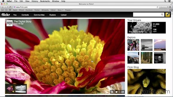 Adding a comment to a photo: Flickr Essential Training