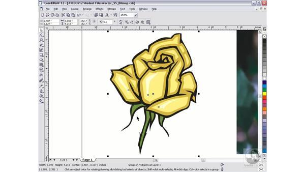 vector vs. bitmap: CorelDRAW 12 Beyond the Basics