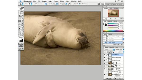 nature 3: Enhancing Digital Photography with Photoshop CS