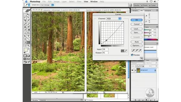 pano 1 - sequoia: Enhancing Digital Photography with Photoshop CS
