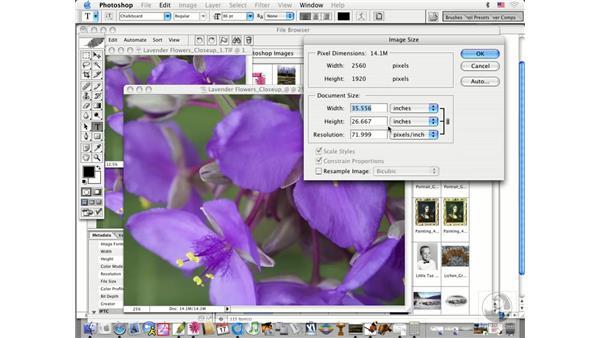 digital camera: Photoshop CS Prepress Essentials