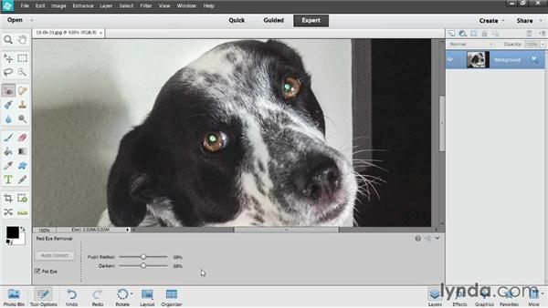 Removing pet eye glow: Up and Running with Photoshop Elements 12