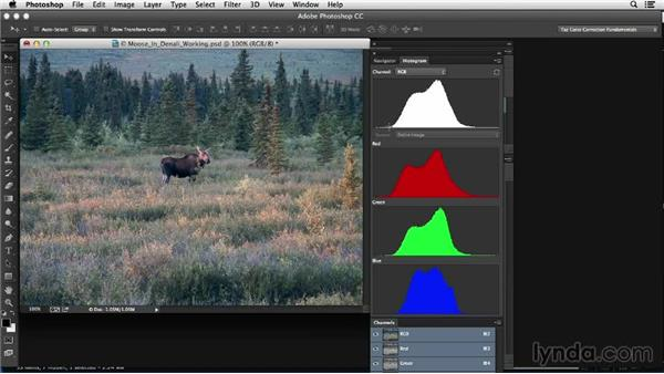 Evaluating the image: Photoshop Color Correction: Low Contrast