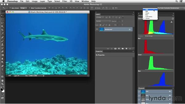Evaluating the image: Photoshop Color Correction: Extreme Color Cast