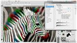Image for 056 Coloring the stripes on a zebra