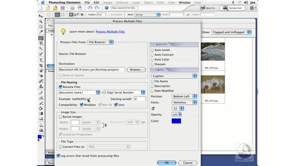 Processing Multiple Files: Photoshop Elements 3 Essential Training