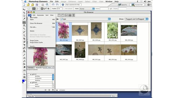The File Browser Interface: Photoshop Elements 3 Essential Training