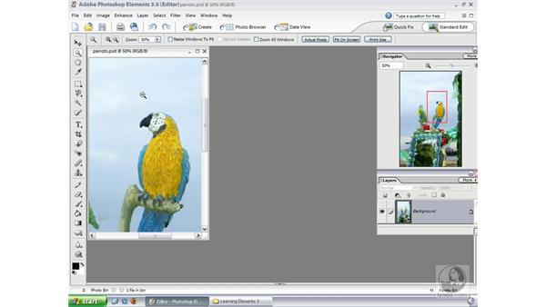 Zooming and Navigating: Photoshop Elements 3 Essential Training