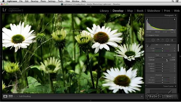 Faux sharpening: Tricks to fake focus: Noise Reduction and Sharpening in Lightroom and Photoshop