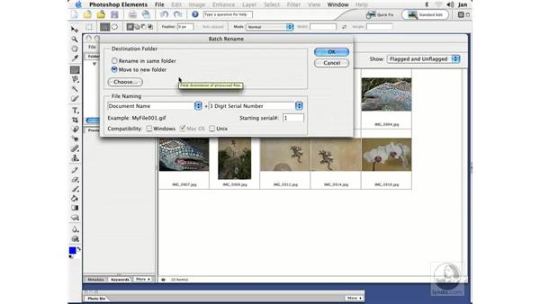 Renaming Files: Photoshop Elements 3 Essential Training