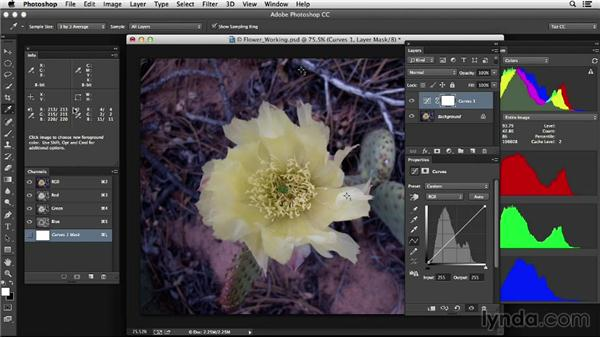Evaluating images with no highlights or neutrals: Photoshop Color Correction: Advanced