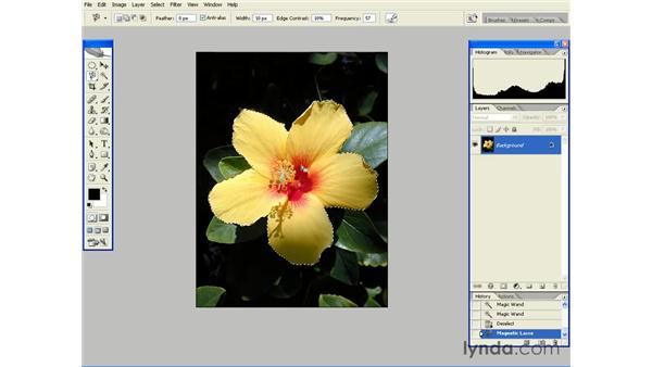 Using the Magnetic Lasso Tool: Photoshop CS2 Essential Training
