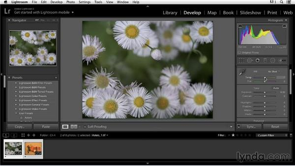 Adjusting color balance with the Temperature and Tint tools: Color Correction in Lightroom
