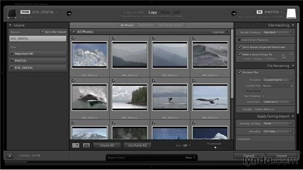 Importing subsequent images: Lightroom 5: 01 Organizing Your Photos