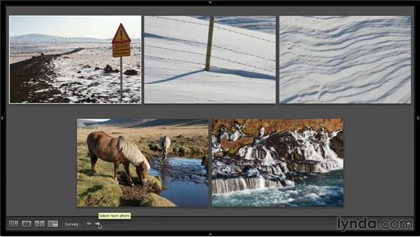 Using Survey view: Lightroom 5: 01 Organizing Your Photos