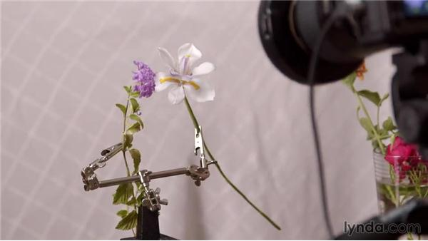 Getting close with an indoor flower setup: Photography 101: Shooting Macros and Close-Ups