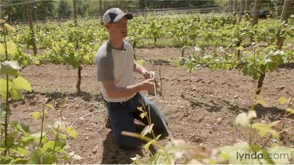 Getting detail shots of the vineyard with a GoPro: Creative GoPro Photography and Video Techniques