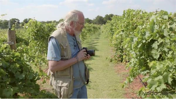 Shooting black and white in a vineyard: Shooting and Processing Black-and-White Film