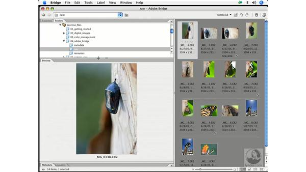 Using the Bridge 1: Enhancing Digital Photography with Photoshop CS2