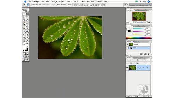 Nature 1: Enhancing Digital Photography with Photoshop CS2