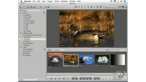 Making adjustments in Aperture vs Photoshop: Aperture 1.1 Essential Training