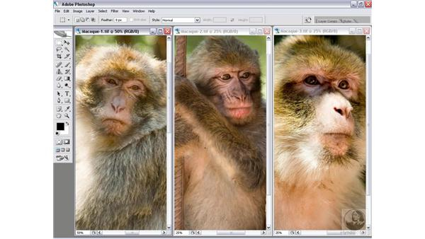 Creating a batch operation: Photoshop CS2 Actions and Automation