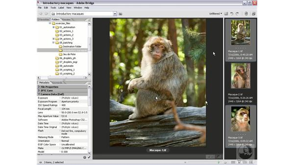 Calling the Batch command from the Bridge: Photoshop CS2 Actions and Automation