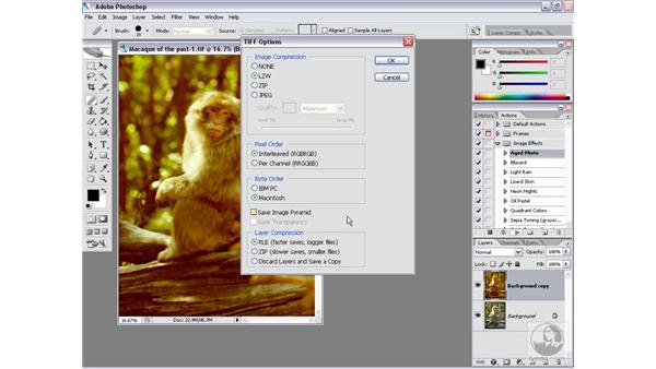 Batch saving: Photoshop CS2 Actions and Automation
