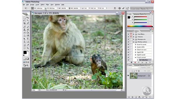 Error management 1: Recording a complex action: Photoshop CS2 Actions and Automation