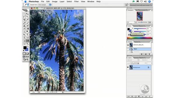 Pointillize: Photoshop Filters