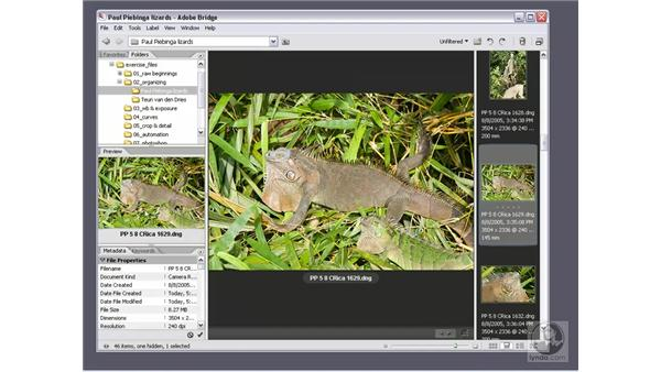Constructing an ideal workspace: Photoshop CS2 Mastering Camera Raw