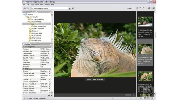 Rating and labeling: Photoshop CS2 Mastering Camera Raw