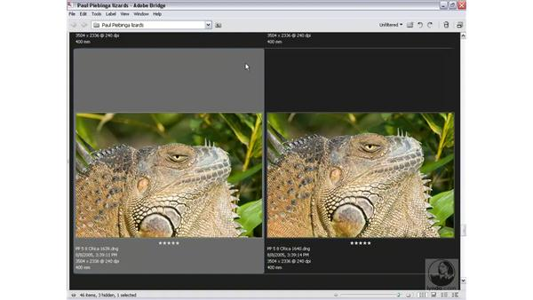 Sorting and comparing: Photoshop CS2 Mastering Camera Raw