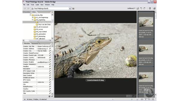 Using File Info: Photoshop CS2 Mastering Camera Raw