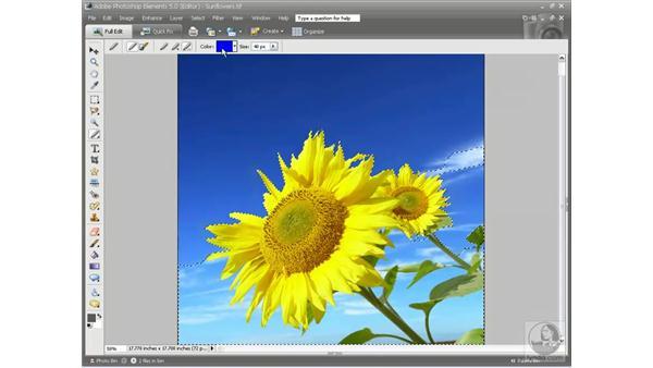 The Magic Selection brush: Photoshop Elements 5 Essential Training