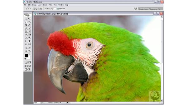 Masking an image against a busy background: Photoshop CS2 Channels & Masks