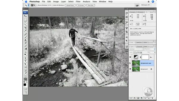 Infrared and foliage: Photoshop CS3 Creative Photographic Techniques