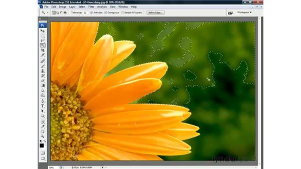 Selecting with the Wand: Photoshop CS3 Channels and Masks: The Essentials