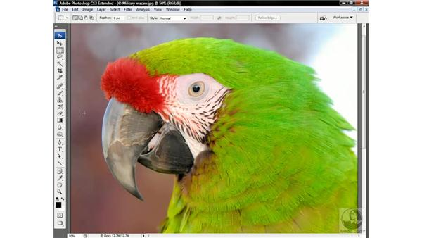 Masking an image against a busy background: Photoshop CS3 Channels & Masks: Advanced Techniques
