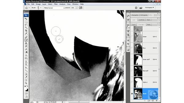 Subtracting and merging the beak: Photoshop CS3 Channels & Masks: Advanced Techniques
