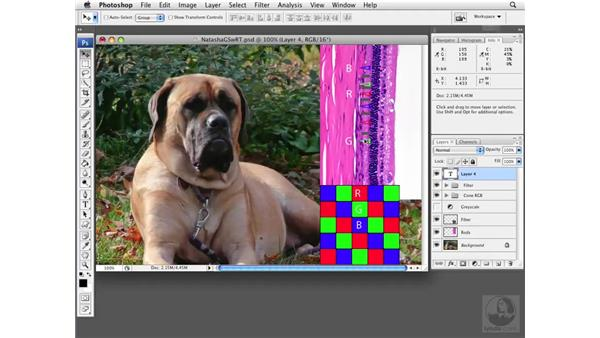 Understanding image detection: Photoshop CS3 Extended for BioMedical Research