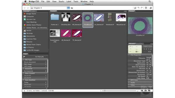 Using the Adobe Camera Raw Converter: Photoshop CS3 Extended for BioMedical Research