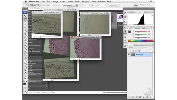 Working with scanned image sets: Photoshop CS3 Extended for BioMedical Research