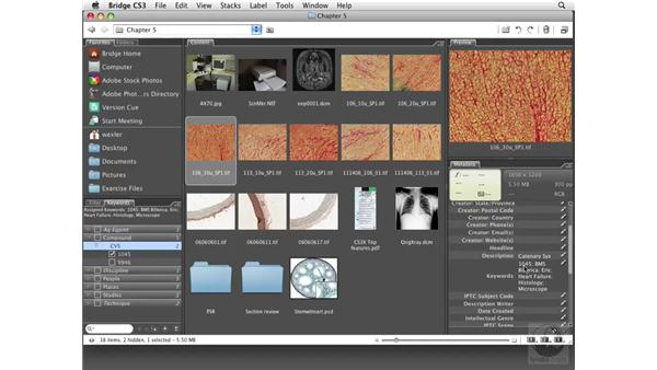 Applying rank, keywords, and filters: Photoshop CS3 Extended for BioMedical Research