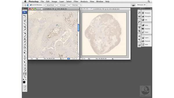 Comparing multiple images: Photoshop CS3 Extended for BioMedical Research