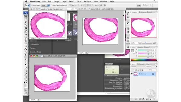 Joining images with compositing: Photoshop CS3 Extended for BioMedical Research